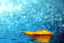 The Voice of the Rain Summary Class 11th English